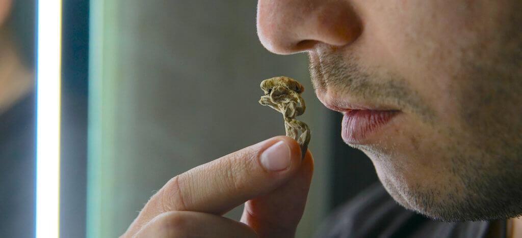 Biohacking and brain development with magic mushrooms.